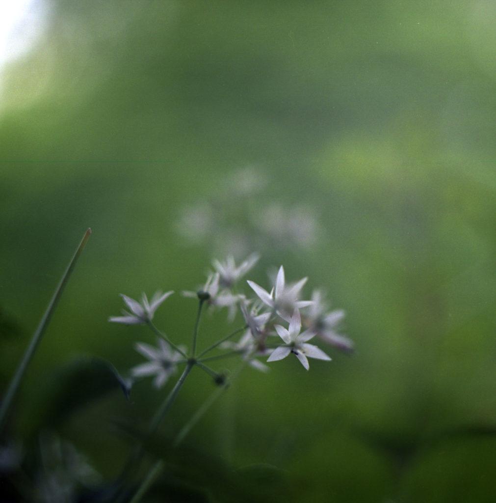 Botanischer Garten042